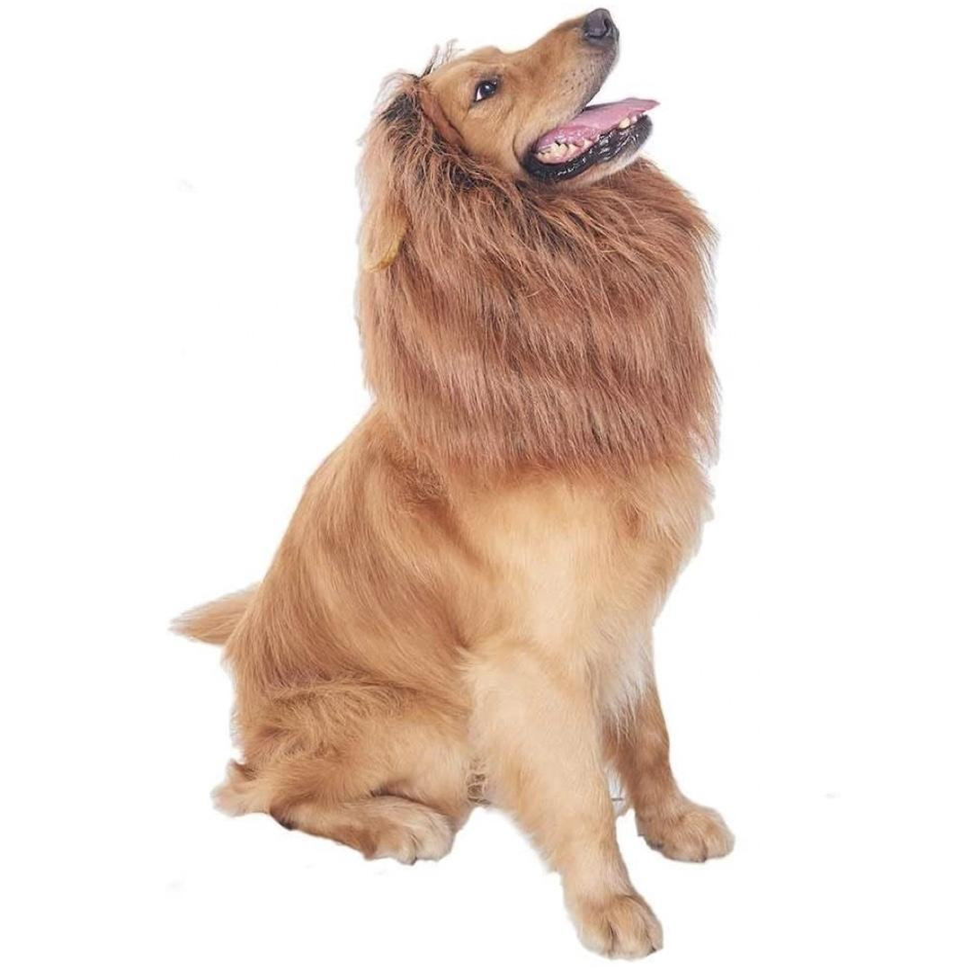 Lion's mane for dogs